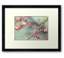 Pink Ume Framed Print