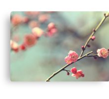 Pink Ume Canvas Print