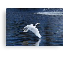 White Heron Flying over water Canvas Print