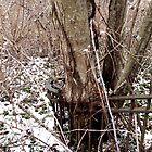 Slightly Overgrown by Paul Lubaczewski