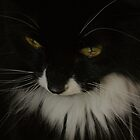 The Cat's Whiskers by pix-elation
