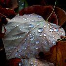 Autumn Tears by Adrienne Berner