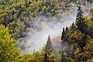 Rising mist on Valserine forest by Patrick Morand