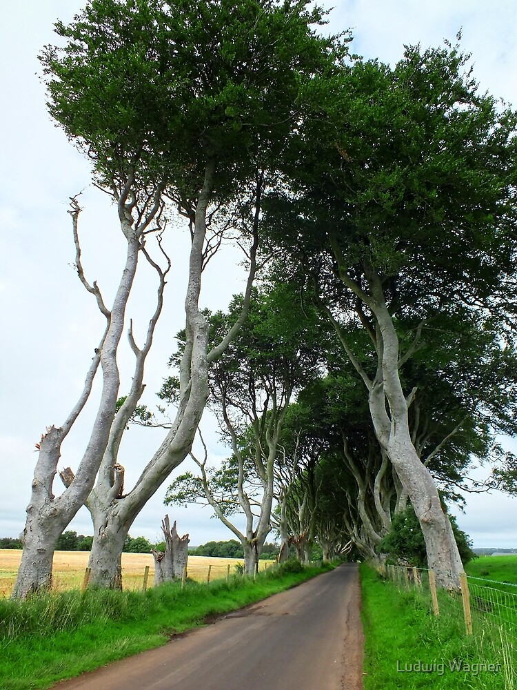 On the Edge of the Dark Hedges by Ludwig Wagner