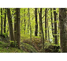 The forest along the Rhone river Photographic Print
