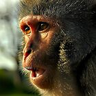 monkey mayhem at longleat zoo  by zacco