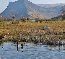 Fleetwith Pike From Buttermere - Lake District by Rod Unwin