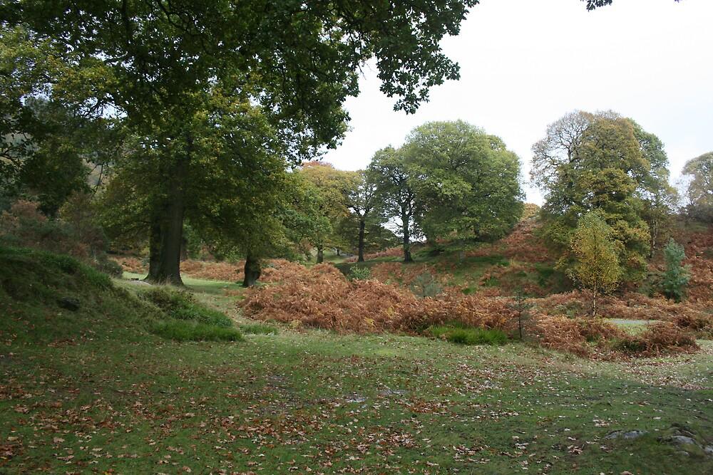 Powerscourt in autumn by John Quinn