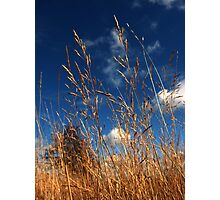 Swaying Reeds Photographic Print