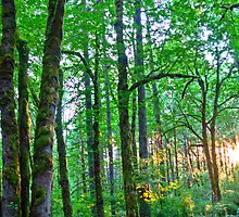 forest light by Bruce  Dickson