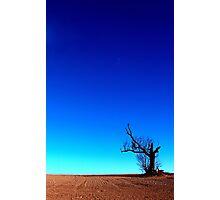 """Alone"" Photographic Print"