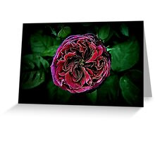 Scent of a Rose Greeting Card