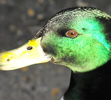 Duck head by Paul Domaille