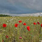 Field of Poppies by loiteke