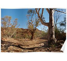 Looking Out From Chambers Gorge - Flinders Ranges - South Australia Poster