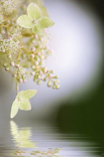 Reflect on Lace by Jacky Parker