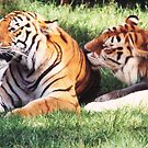 Tigers by Keith Smith