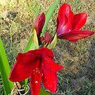 Seasonal Bloom  by 4spotmore