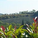 Classic Tuscany by merran