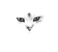 Gato blanco by Candy1974