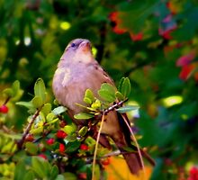 Bird by R&PChristianDesign &Photography