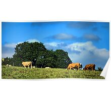 Grazing  Poster