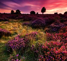 Dunwich Heath 1. by Wayne Bradshaw