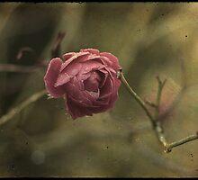 _ la rose _ by Louise LeGresley