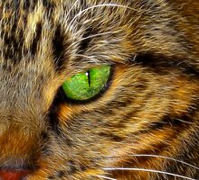 Tiger's Eye by AngelPhotozzz