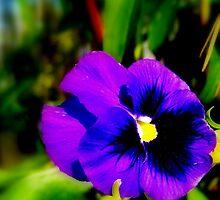 Purple Pansy by DottieDees