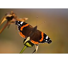 bloomfly Photographic Print
