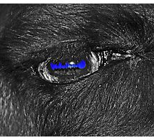 Non-Edited close up of a Llama's eye (description explains why it looks this way.) Photographic Print