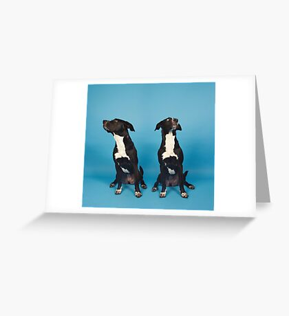 Two Face | Black Dogs Greeting Card