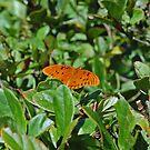 Orange in a field of green by joeschmoe96