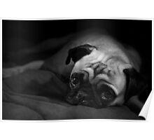 Living The Pug Life Poster