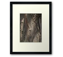 Honey Locust Tree Bark Framed Print