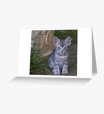 Tabby Kitten  * Izzie * Greeting Card