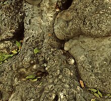 Gnarled Tree Bark, Haiti by Anna Lisa Yoder