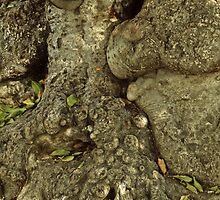 Gnarled Tree Bark, Haiti by Anna Lisa Yoder