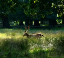 Stag in the Sun by Lee West