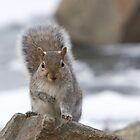 Got nuts? by John Wright