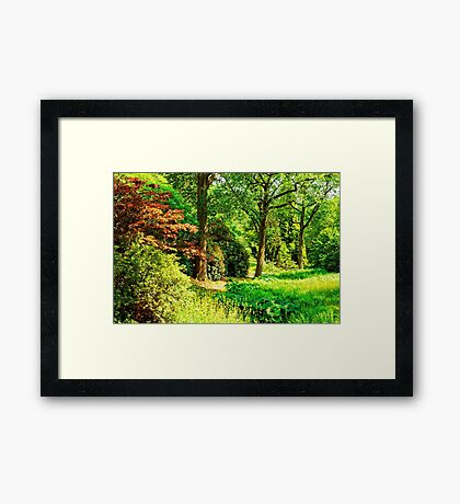 """""""Spring is in the Air..."""" Framed Print"""