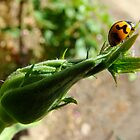 ladybird, ladybird, fly away home by Jan Stead JEMproductions
