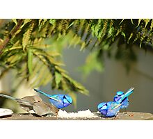 Bluey Lunch Photographic Print
