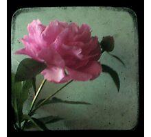 Grandma's Peonie - Still Life TTV Photographic Print