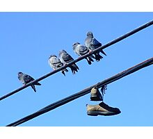 Shoe Pigeons Photographic Print