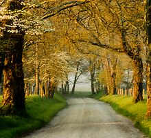 Sparks Lane by Jay Stockhaus