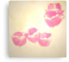 Hazy Pink Tulips Canvas Print