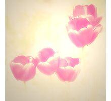 Hazy Pink Tulips Photographic Print