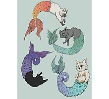 Cat Mermaid  Photographic Print